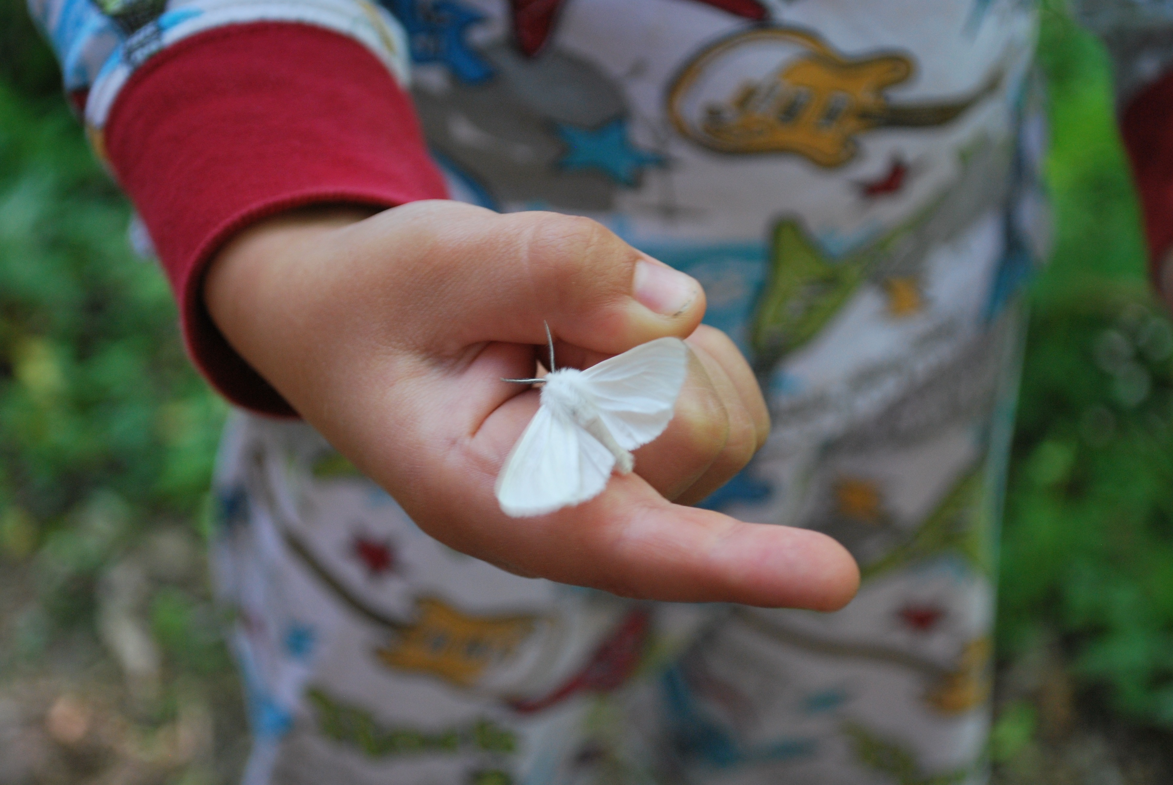 White moth on child's finger