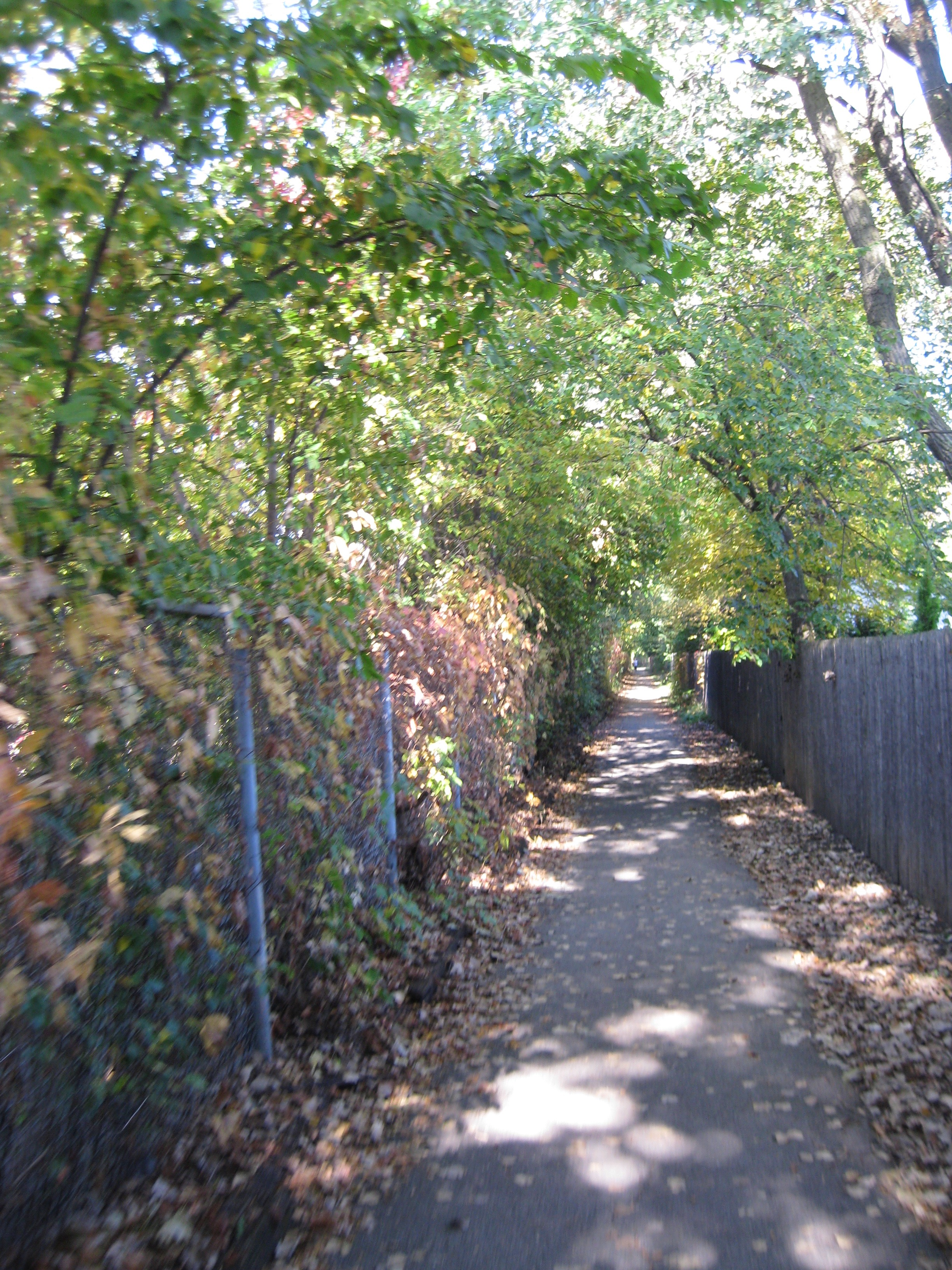 An overgrown trail nested in the city