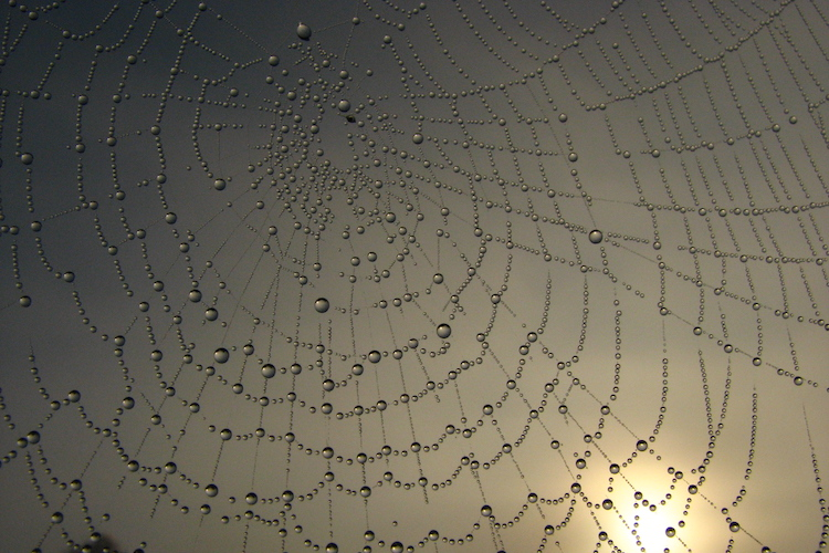 Web of Possibility
