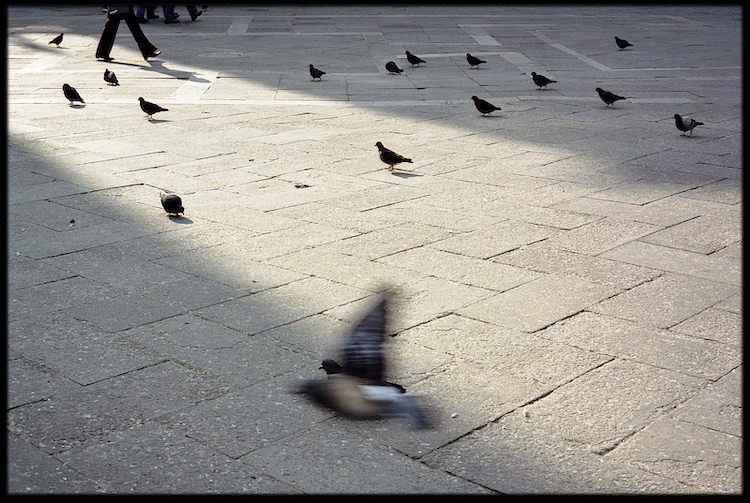 Chasing Pigeons into a Wilder World