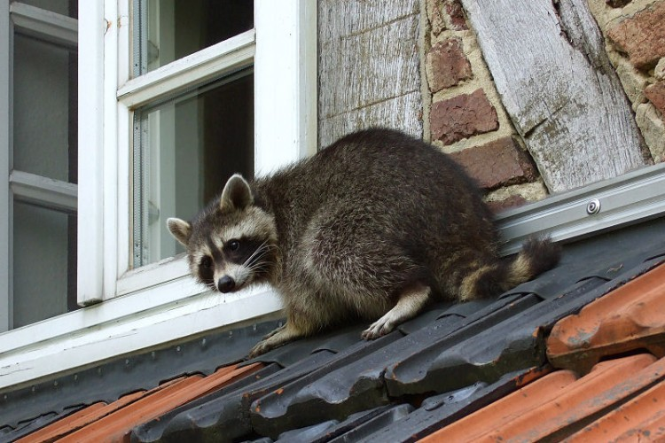 The Wild and Not-So-Wild City Creature Neighbors at, by, and in My House