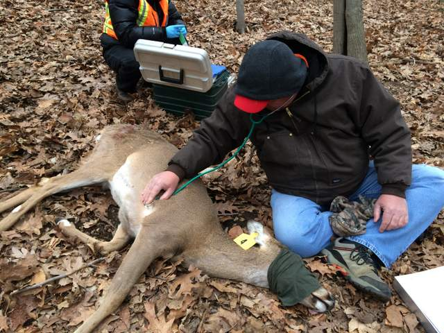 Hastings Deer Heart Rate Monitored