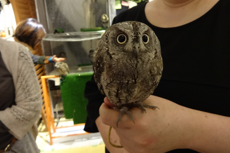 Tea with an Owl in Tokyo