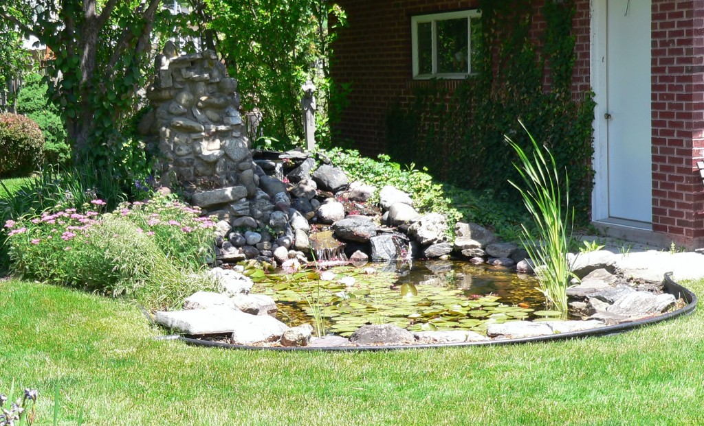 Kaye's pond 1