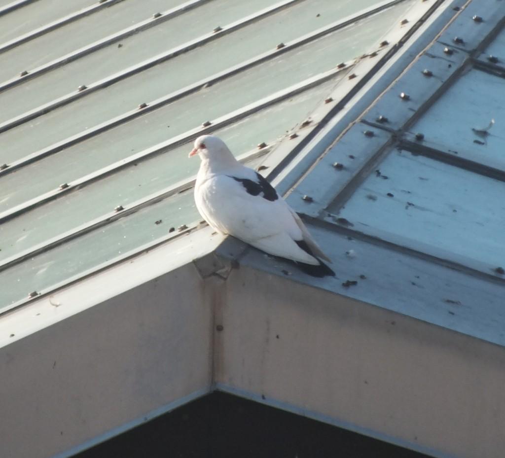 Rorschach Pigeon Portrait