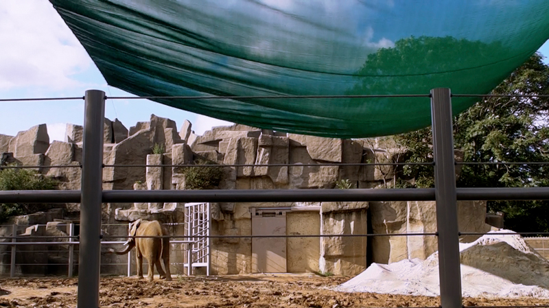 Brookfield Zoo (exhibit closed. Joyce, shipped back to Six Flags Park in New Jersey)
