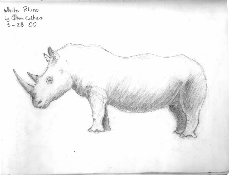 White Rhino — Benn Colker, age 12