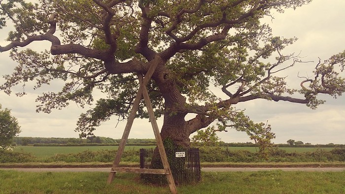 Ketts Oak, located at the side of the B1172 road between Wymondham and Hethersett in Norfolk, England.  The tree is the traditional location where in 1549 Robert Kett and his brother William addressed a group of men in what was to become Kett's Rebellion.