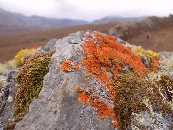 Lichens and moss on a rock