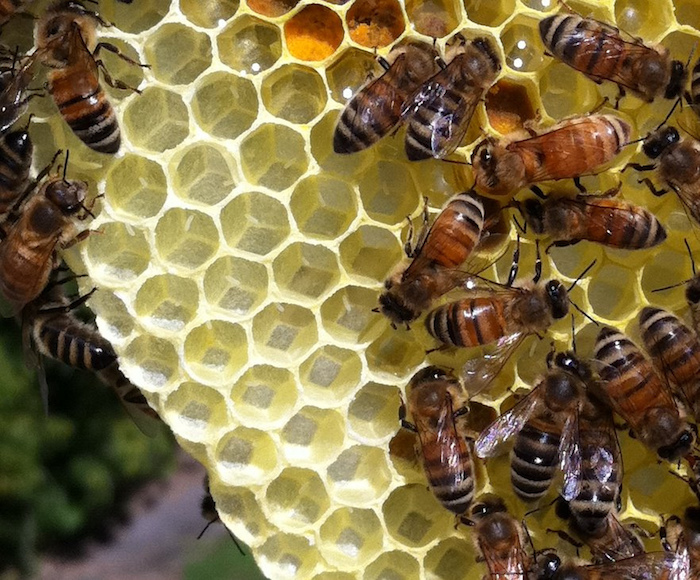A honeycomb full of bee eggs