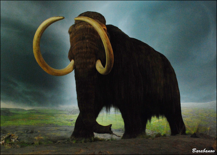 Painting of woolly mammoth at The Royal Museum of BC.