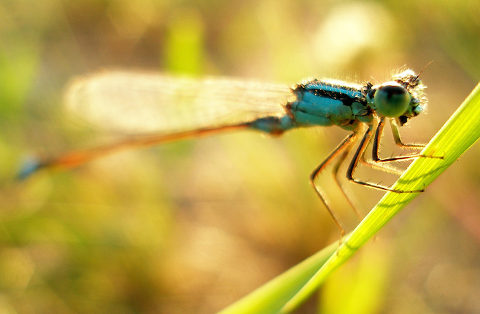 A dragonfly perched upon a blade of grass