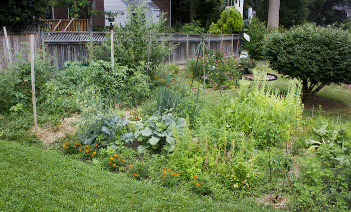 Overgrown backyard garden.