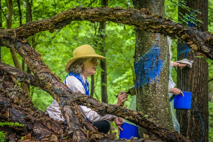 Activists painting trees for The Blued Tree Symphony