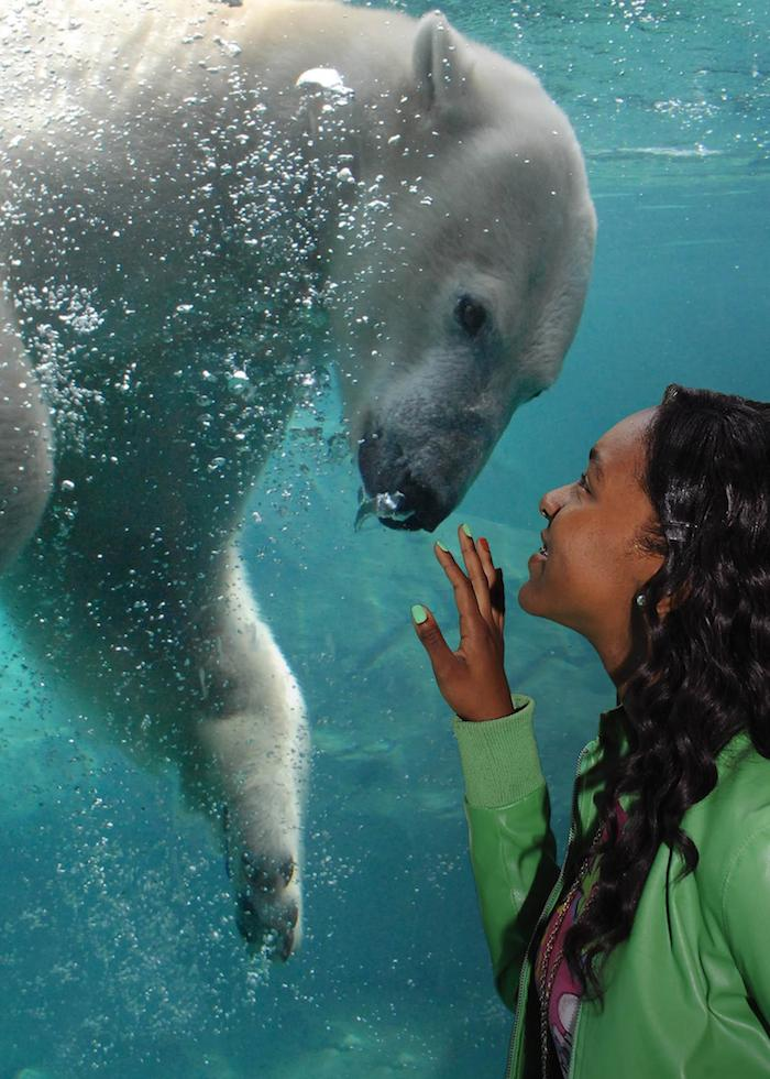 Woman making eye contact through glass with underwater polar bear