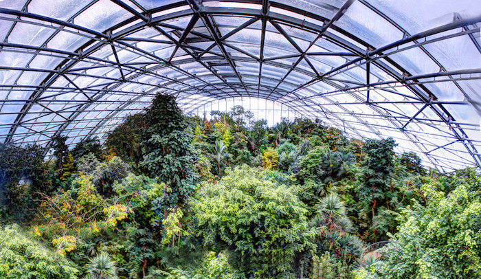 The Canopy of an indoor rainforest