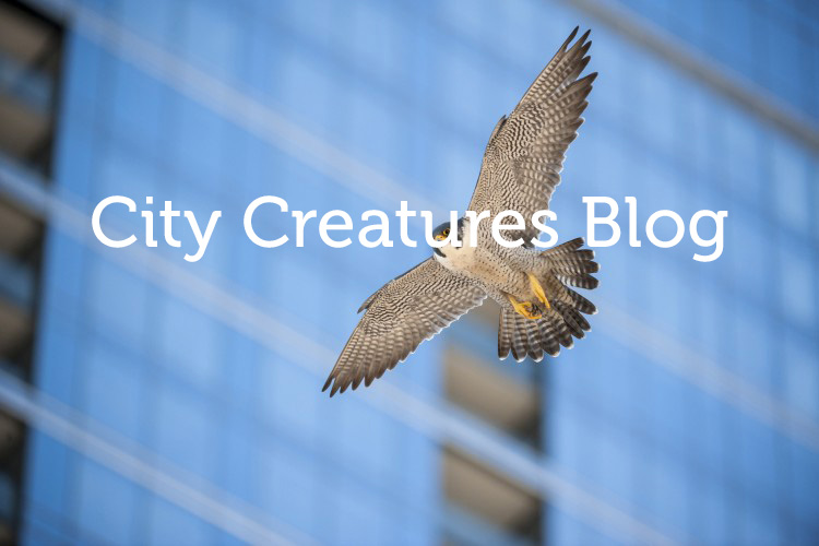 Submissions - City Creatures