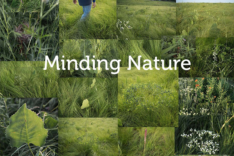 Submissions - Minding Nature